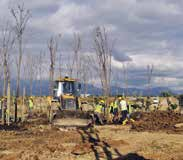 Expo Arşivi EXPO haberler... Mulberry Trees will be replanted The trees on the VIP and Press Center buildings at the EXPO 2016 Antalya site were uprooted under the supervision of experts.