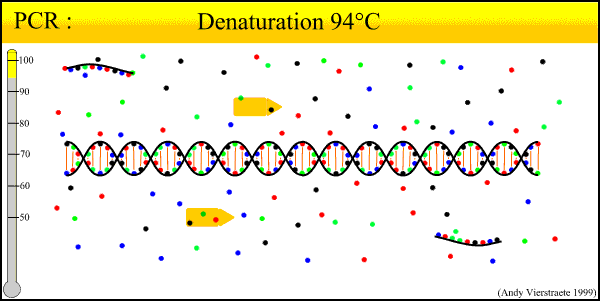 Amplifikasyon Yöntemleri «Polimarase chain reaction» (PCR) Nucleic Acid
