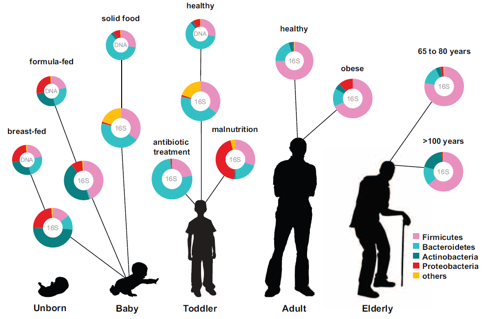 Human microbiota: onset and shaping through
