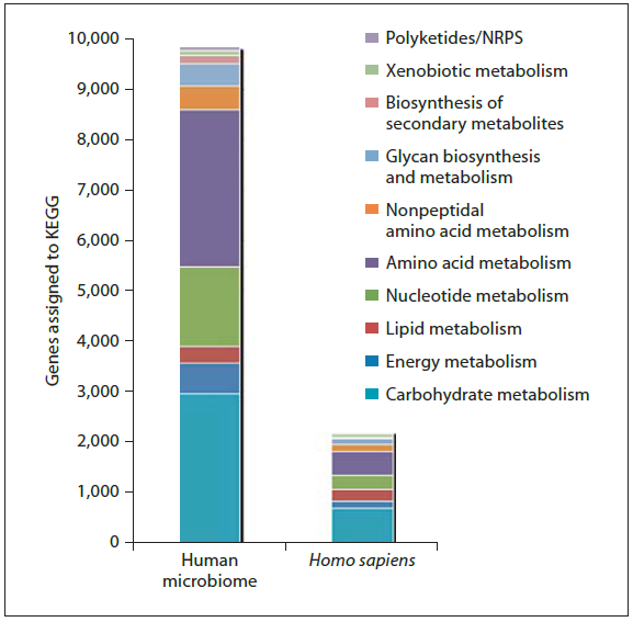Comparison of the number of KEGG (Kyoto Encyclopedia of Genes and Genomes) genes involved in metabolic pathways within all the assembled data of the human genomes and the
