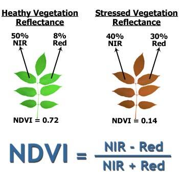 Normalized Difference Vegatation Indice (NDVI) NDVI = (IR-Red) / (IR+Red) NDVI=