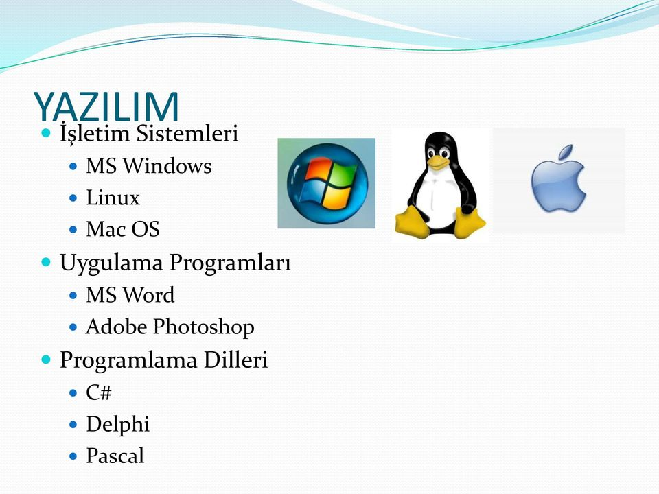 Programları MS Word Adobe