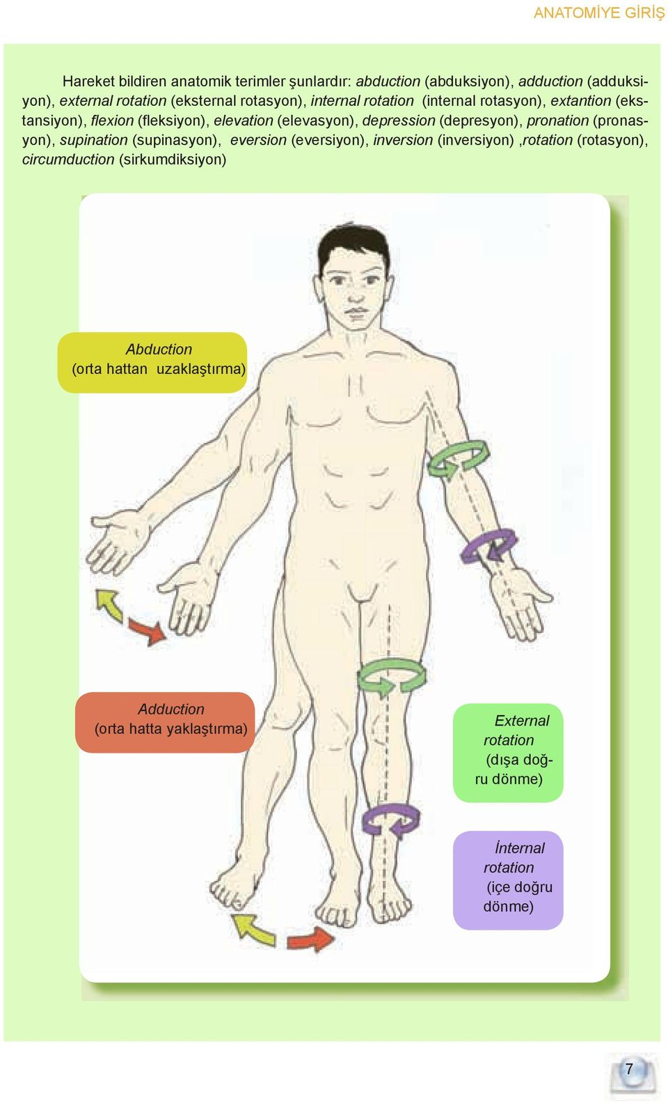 pronation (pronasyon), supination (supinasyon), eversion (eversiyon), inversion (inversiyon),rotation (rotasyon), circumduction