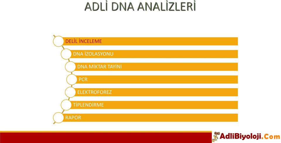 DNA MİKTAR TAYİNİ PCR