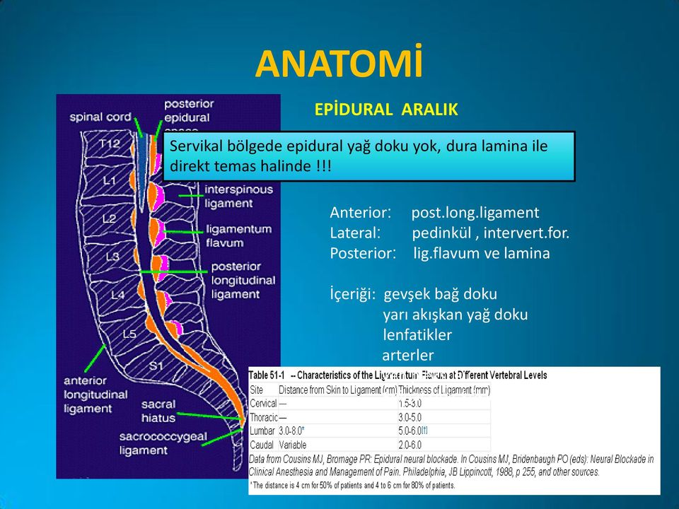 !! ---sakral hiatus Anterior: Lateral: Posterior: post.long.ligament pedinkül, intervert.