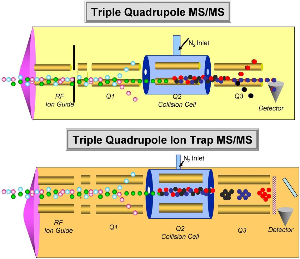Triple Quadrupole Ion Trap MS/MS N 2