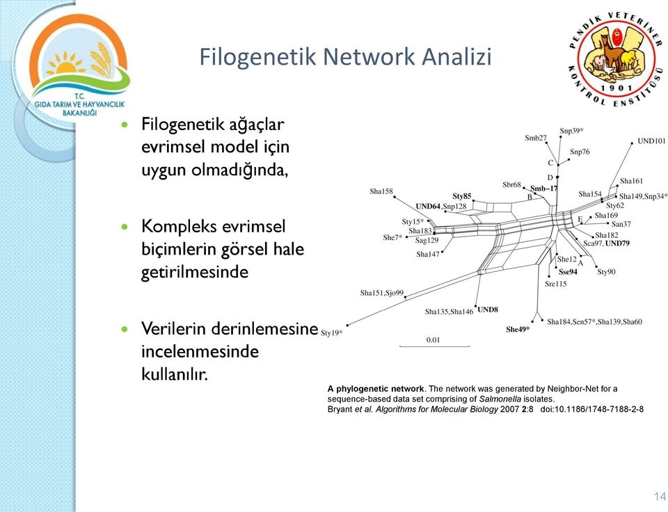 A phylogenetic network.