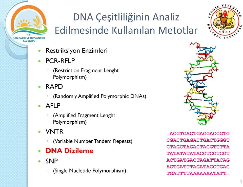 VNTR (Variable Number Tandem Repeats) DNA Dizileme SNP (Single Nucletide Polymorphism) ACGTGACTGAGGACCGTG