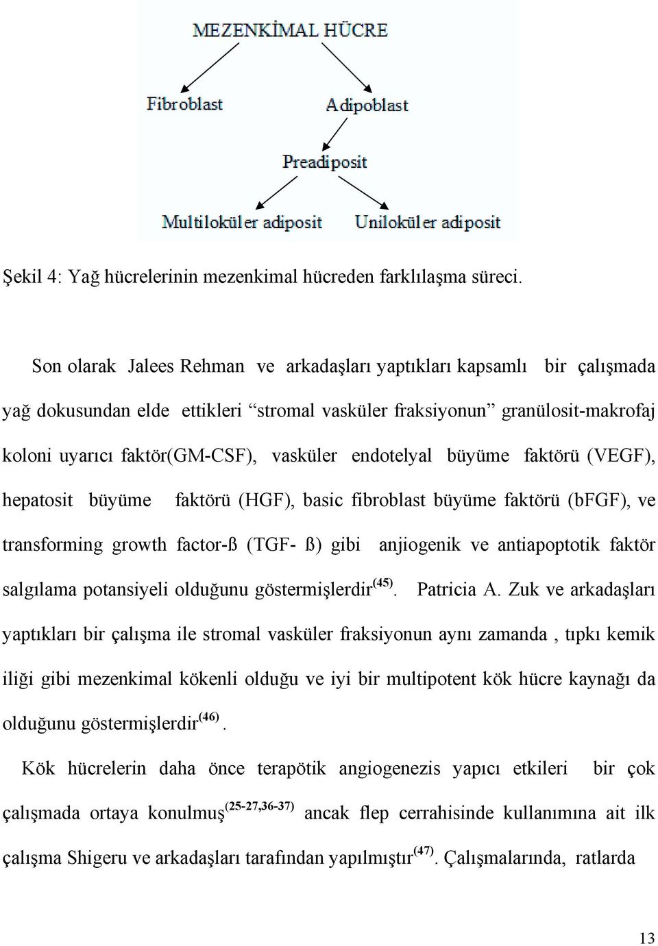 endotelyal büyüme faktörü (VEGF), hepatosit büyüme faktörü (HGF), basic fibroblast büyüme faktörü (bfgf), ve transforming growth factor-ß (TGF- ß) gibi anjiogenik ve antiapoptotik faktör salgõlama