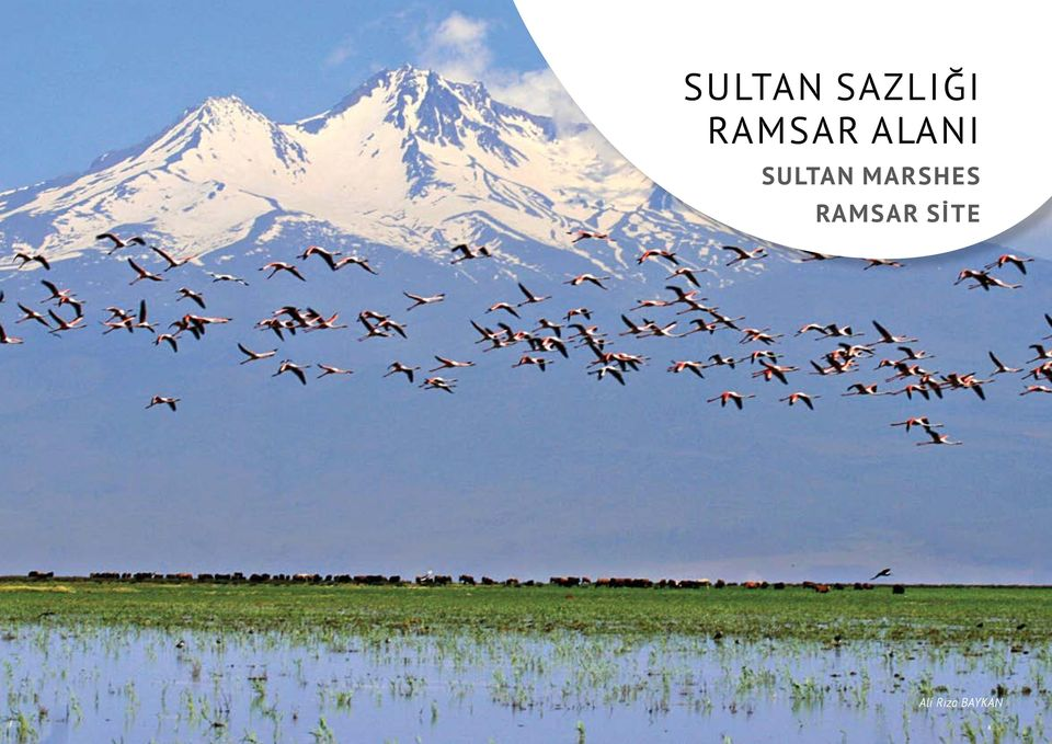 Sultan Marshes