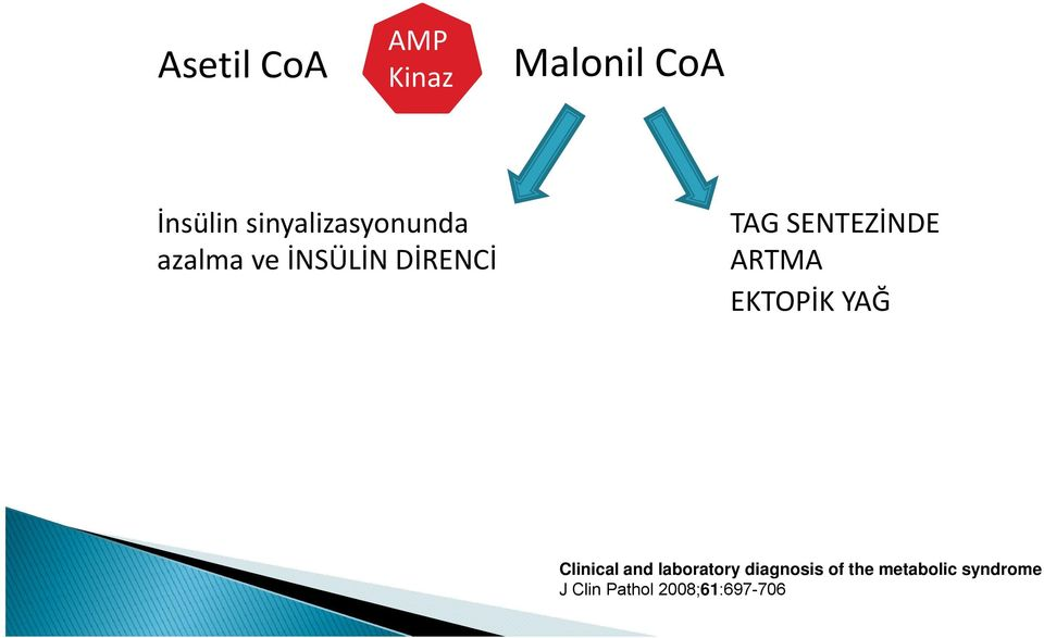 SENTEZİNDE ARTMA EKTOPİK YAĞ Clinical and