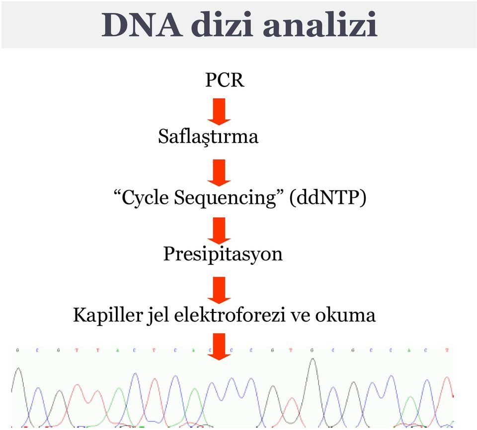 Sequencing (ddntp)