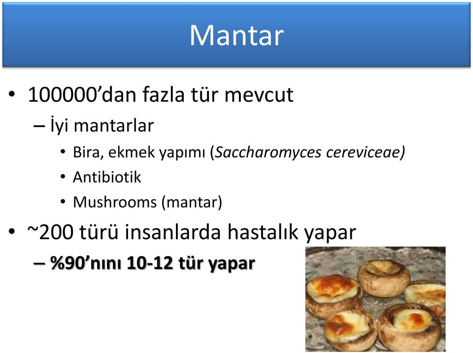 cereviceae) Antibiotik Mushrooms (mantar) ~200