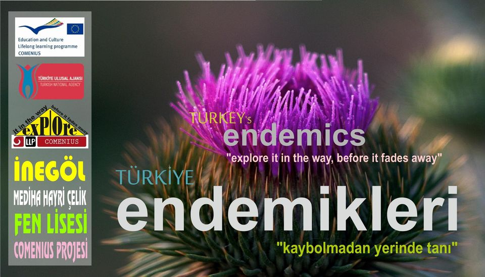 "TURKEY'S endemics ""explore it in the way, before it"