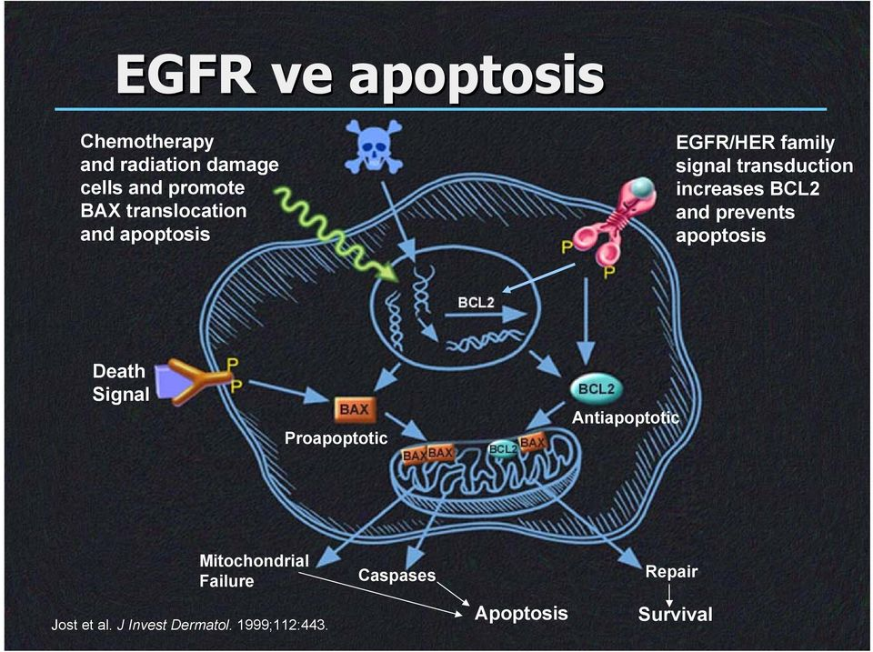and prevents apoptosis Death Signal Proapoptotic Antiapoptotic Jost et al.