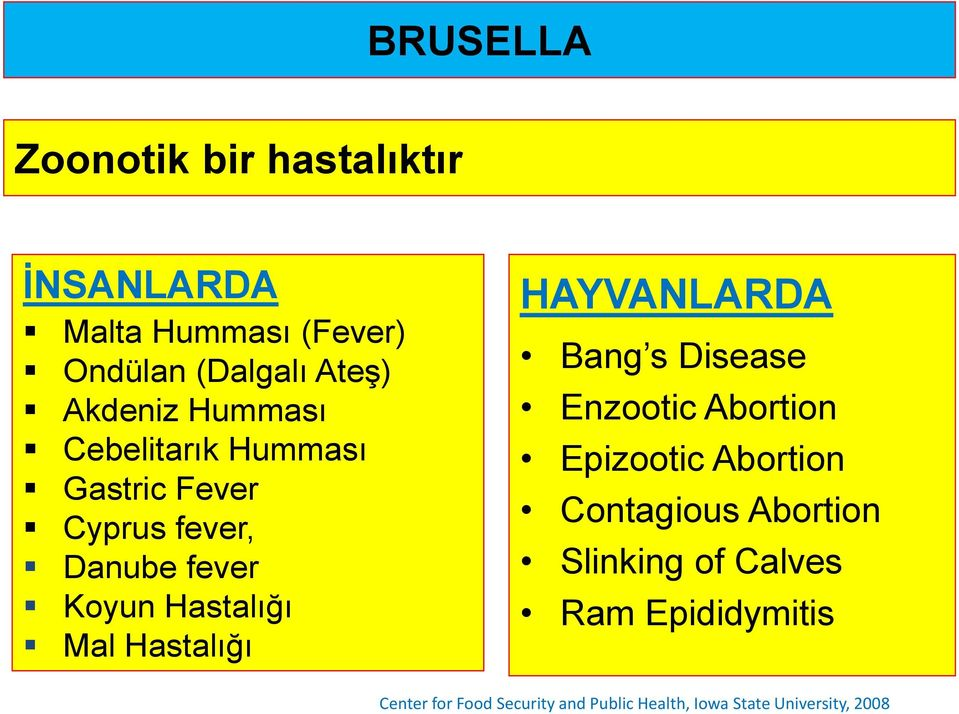 Hastalığı HAYVANLARDA Bang s Disease Enzootic Abortion Epizootic Abortion Contagious Abortion