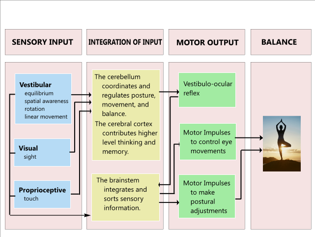 In any type of perturbation, sensory information must be integrated from a variety of sources including somotosensory, visual and vestibular pathways to make appropriate balance corrections.