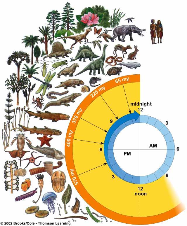 Age of reptiles Insects and amphibians invade the land Plants invade the land Age of mammals Modern İnsan (Homo sapiens) Gece yarısına 2 saniye